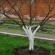 Осіння підтримка росту коренів дерев