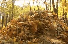 Що робити з опалим листям: корисна переробка осіннього листя