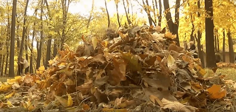 Що робити з опалим листям