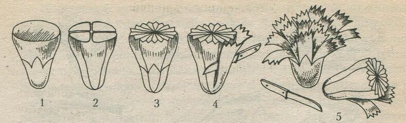 Виготовлення гвоздики з овочів