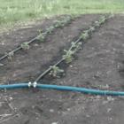 Крапельний полив: коли не вистачає води для поливу