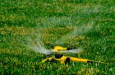 Догляд за газоном в червні