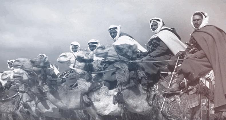 Верблюжа кавалерія