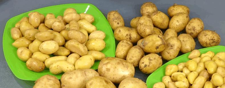 Молода картопля: настав час збирати