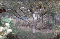 Жовтень в саду і на городі: осінній сезон садівника-городника