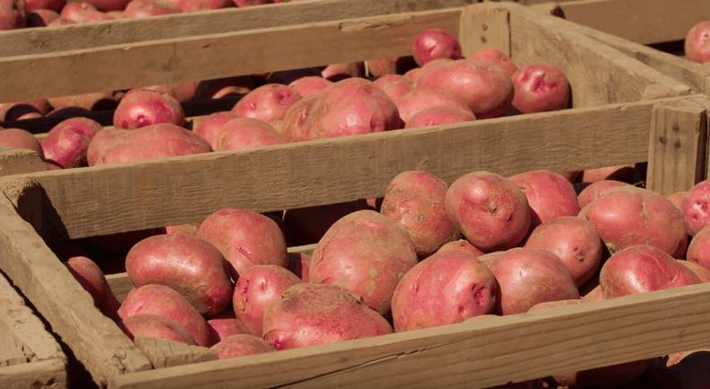 Як зберігати картоплю в квартирі, щоб вона не проростала