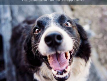 Від нападу собаки потрібно вміти захищатись і відбиватись